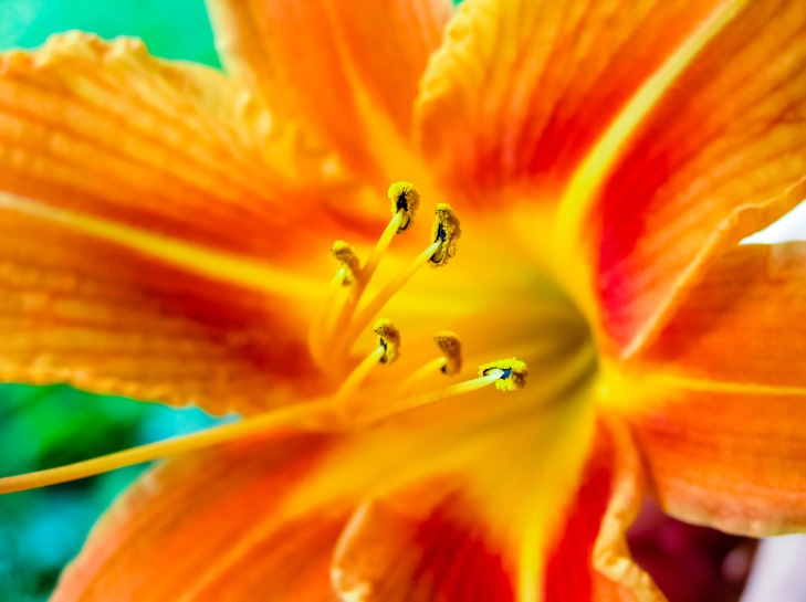 Anthers