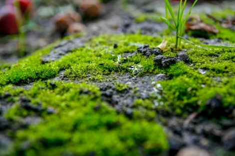 Moss and snail slime