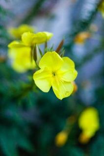 One of my favorite flowers