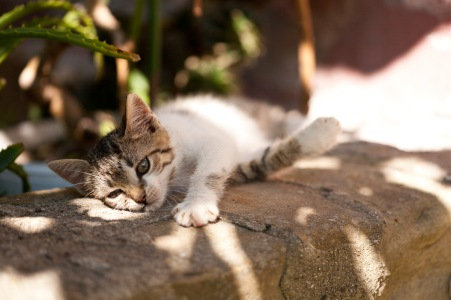 Trixie, resting on a stone ledge on a hot summer day.