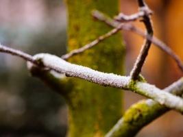 A frosty morning in Medias, Romania