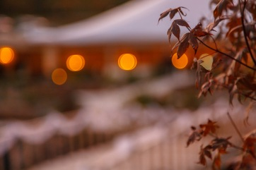 Leaves and lights