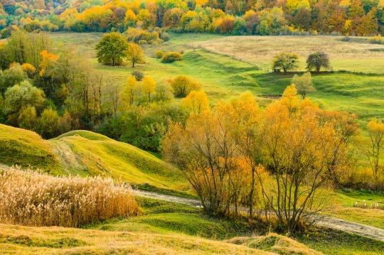 Somewhere near Canionul Mihaileni, Transilvania, Romania