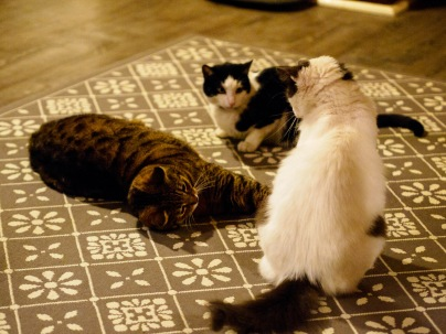 From left to right: Bubu, Toto and Stefanel