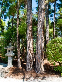 Pine trunks and stone lantern, Morikami Museum and Japanese Gardens, Delray Beach, FL, USA.