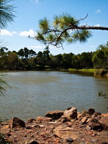 On a rocky lake shore, Morikami Museum and Japanese Gardens, Delray Beach, FL, USA.