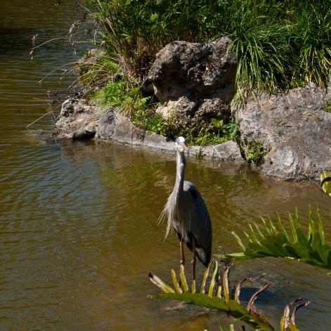 Heron, Morikami Museum, Delray Beach, Florida, USA.