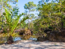 Ferns, Morikami Museum and Japanese Gardens, Delray Beach, FL, USA. (raoulpop.com)