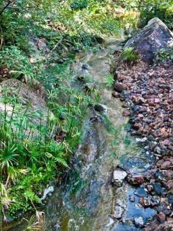 Stream, Morikami Museum and Japanese Gardens, Delray Beach, FL, USA.