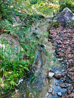 Stream, Morikami Museum and Japanese Gardens, Delray Beach, FL, USA.
