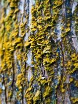 Moss on tree trunk, Morikami Museum and Japanese Gardens, Delray Beach, FL, USA.