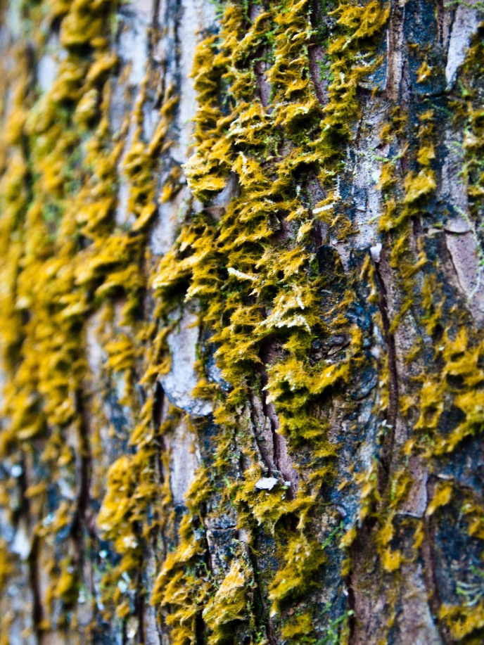Moss on tree trunk, Morikami Museum and Japanese Gardens, Delray Beach, FL, USA.