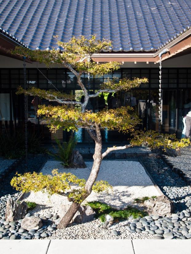 Miniature tree, Morikami Museum and Japanese Gardens, Delray Beach, FL, USA.