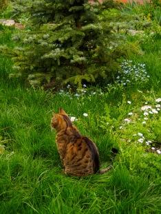 Bubu sitting in the meadow