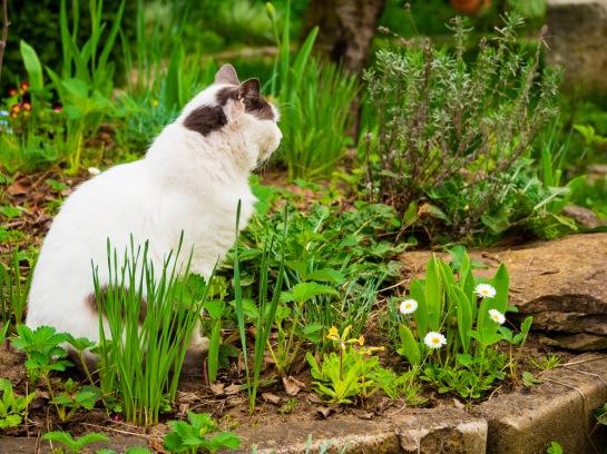 Stefanel sits on the hilltop