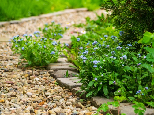 These flowers just love to spring up on the garden path instead of sticking to the tended grounds. Also notice the itsy-bitsy spider hiding behind the shrub in the foreground.