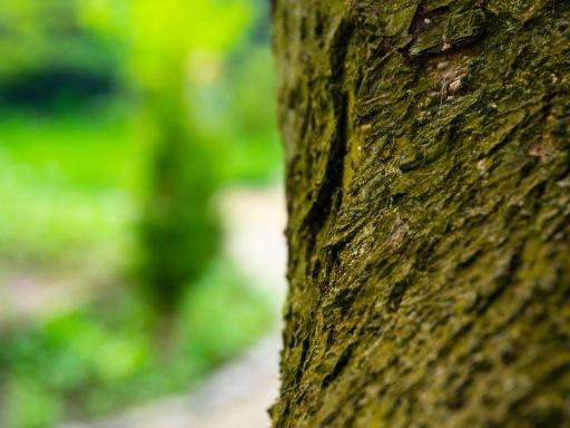 Apple bark