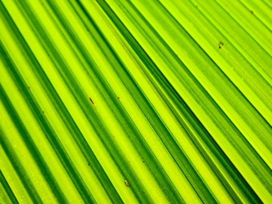 Detail from a leaf. Vizcaya, Miami, Florida, USA