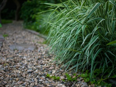 Long grass along the path
