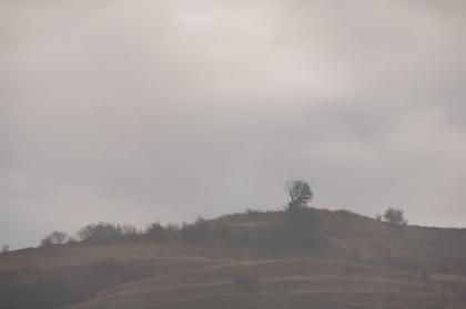 Autumn fog