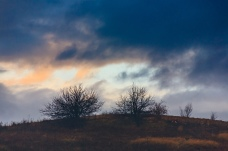 Two trees and dark clouds