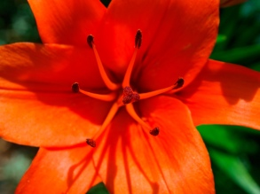 Stigma and anthers
