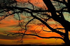Sunset near Sighisoara, as seen through the branches of a tree.